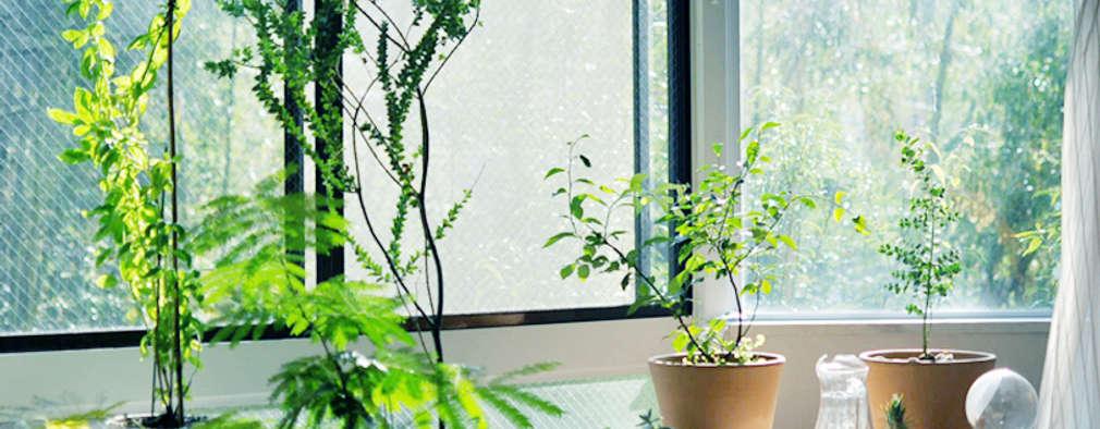 Jardin de style de style eclectique par HANKURA Design