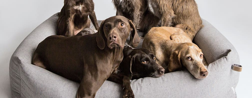 by Cloud 7 Finest Interiors for Dogs & Dog Lovers