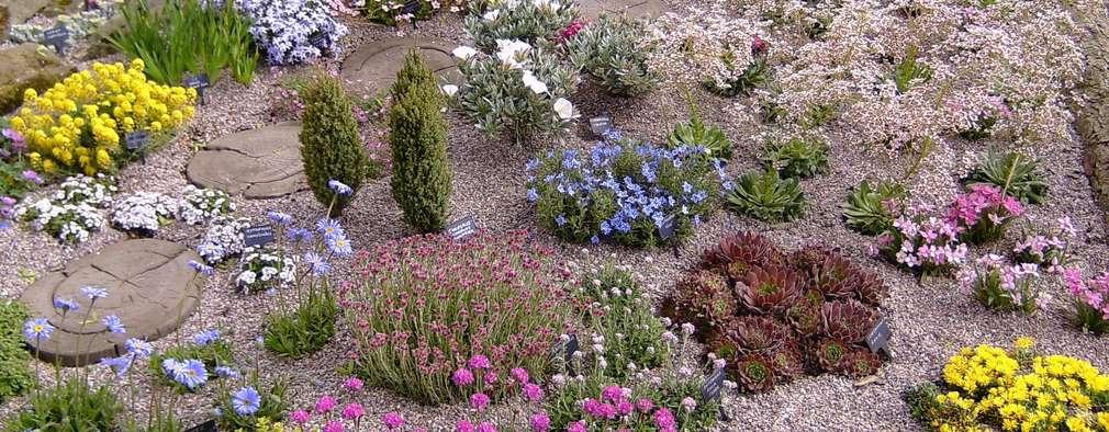Projekty,  Ogród zaprojektowane przez Ice Alpines