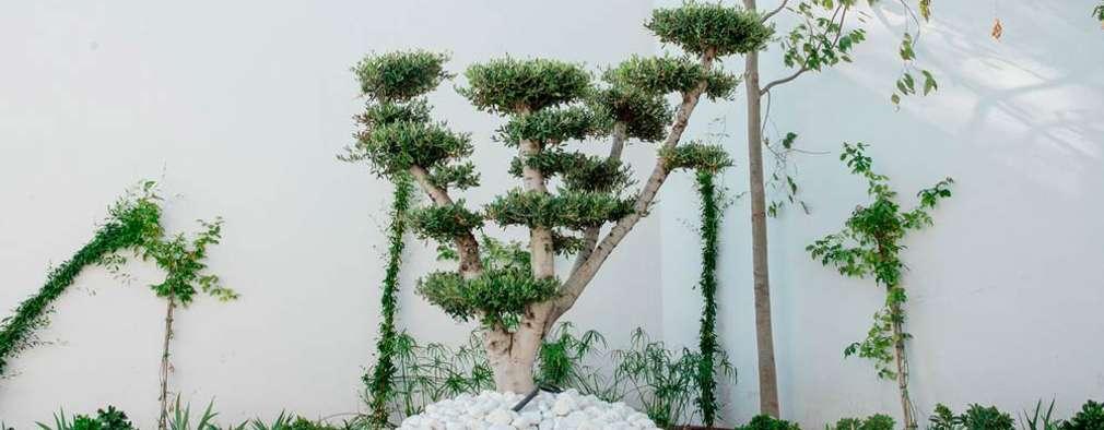 Jardines de estilo moderno por Beatrice Perlac - Adarve Jardines