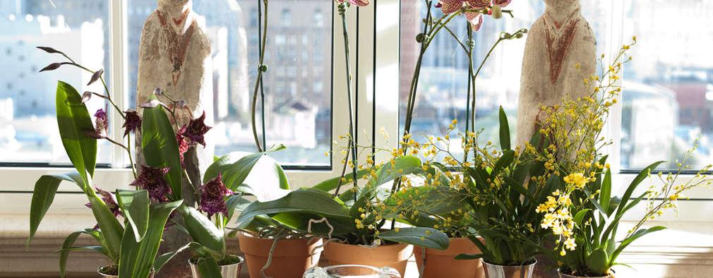 Jardines de invierno de estilo clásico por Antonio Martins Interior Design Inc