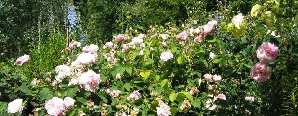 Rboles y arbustos para un jard n peque o con encanto for Arbustos jardin pequeno