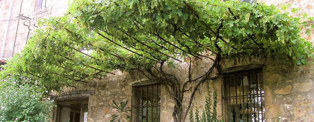 Jardines de estilo ecléctico por FRANCIS BENINCA