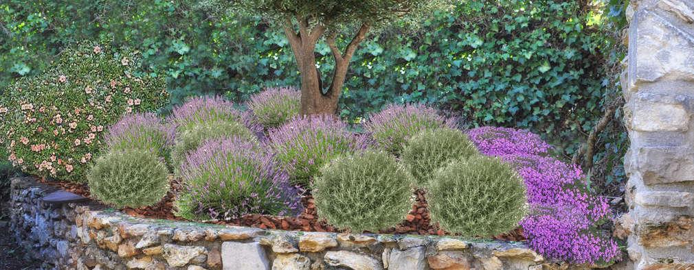 mediterranean Garden by homify