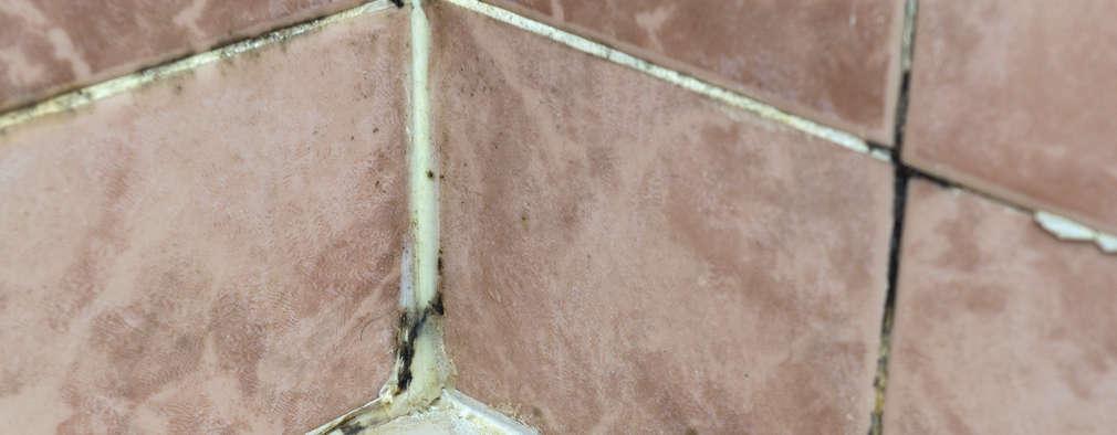 Como eliminar el moho de tu casa para siempre - Como eliminar el moho ...