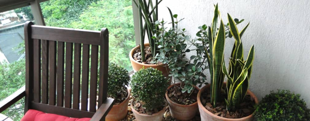 14 ideas para crear un jard n bonito y peque ito en for Jardin chico casa