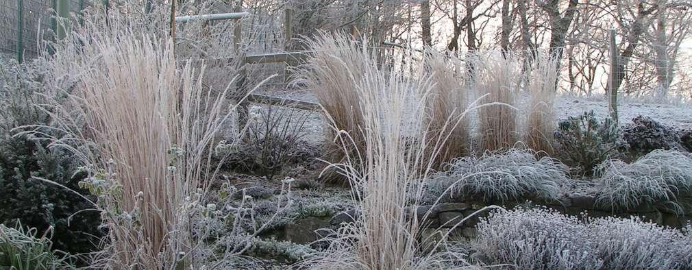 5 conseils simples pour prendre soin de son jardin en hiver for Prendre soin de son enfant interieur