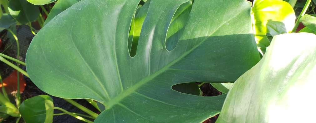 de estilo  por Perfect Plants Ltd