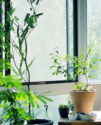 Plantes De Maison Idees Inspirations