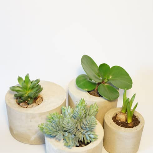 sukkulenten so setzen sie die dekorativen pflanzen in szene. Black Bedroom Furniture Sets. Home Design Ideas