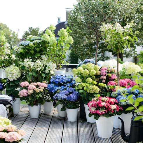 Como arreglar tu patio con poco dinero for Arreglar jardin con poco dinero