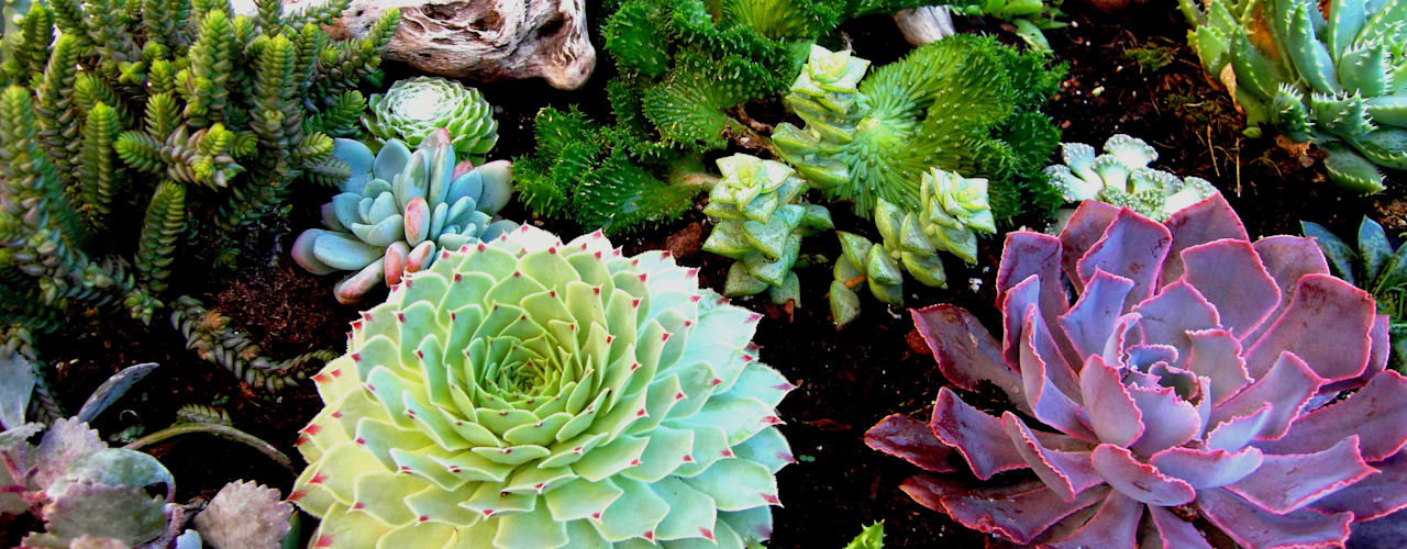 Jardins  por Simbiosi Estudi