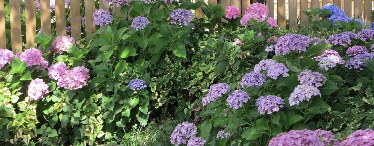 Jardines de estilo moderno de alessia brignardello Moderno
