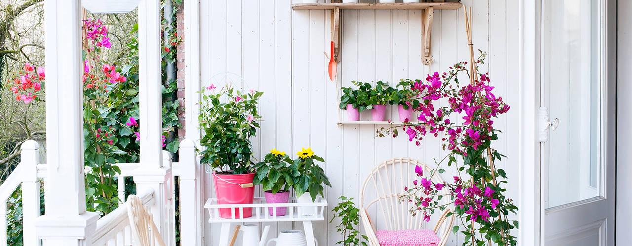 Pflanzenfreude.de JardinesPlantas y flores