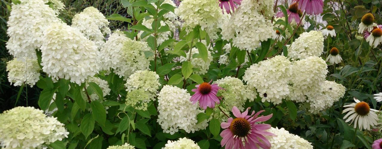 Pflanzplanung Hotelzufahrt Chiemsee Moderner Garten von Blumen & Gärten Modern