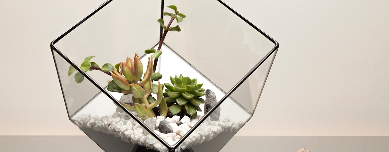 Terrarium Installations 现代客厅設計點子、靈感 & 圖片 根據 The Urban Botanist 現代風