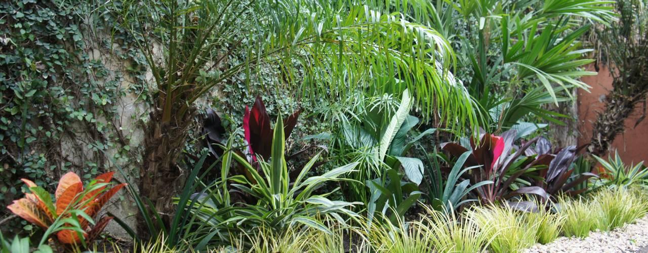 Jardines de estilo tropical de Estudio Nicolas Pierry: Diseño en Arquitectura de Paisajes & Jardines Tropical