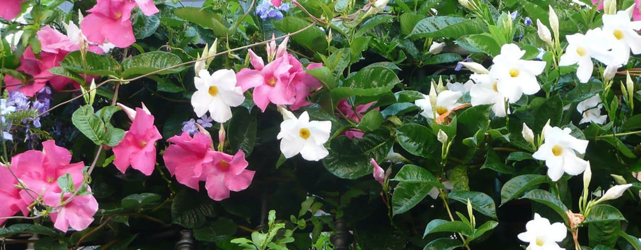 Jardins clássicos por My Little Jardin Clássico