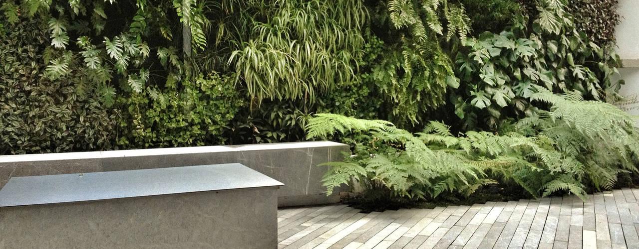 庭院 by DF ARQUITECTOS, 現代風