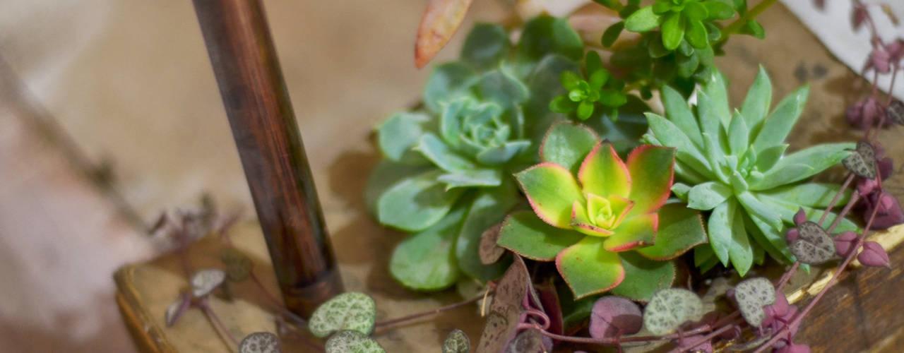 10 plantes qui attireront richesse et prosp rit chez vous - Plante d interieur porte bonheur ...