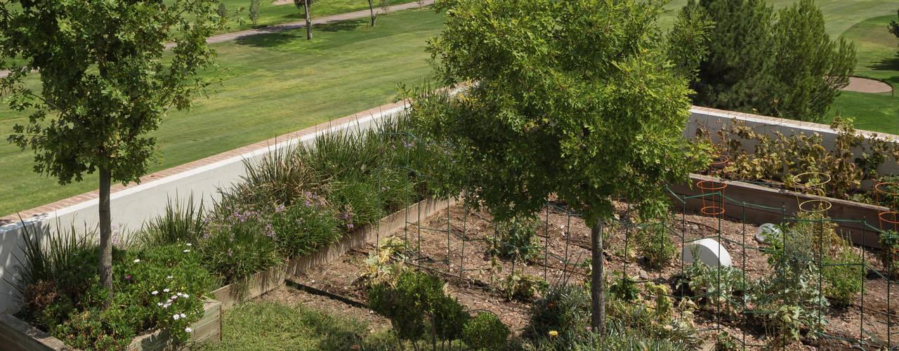 Terrazas y techos verdes. Huerto urbano. Jardines modernos: Ideas, imágenes y decoración de ARQUITECTURA EN PROCESO Moderno