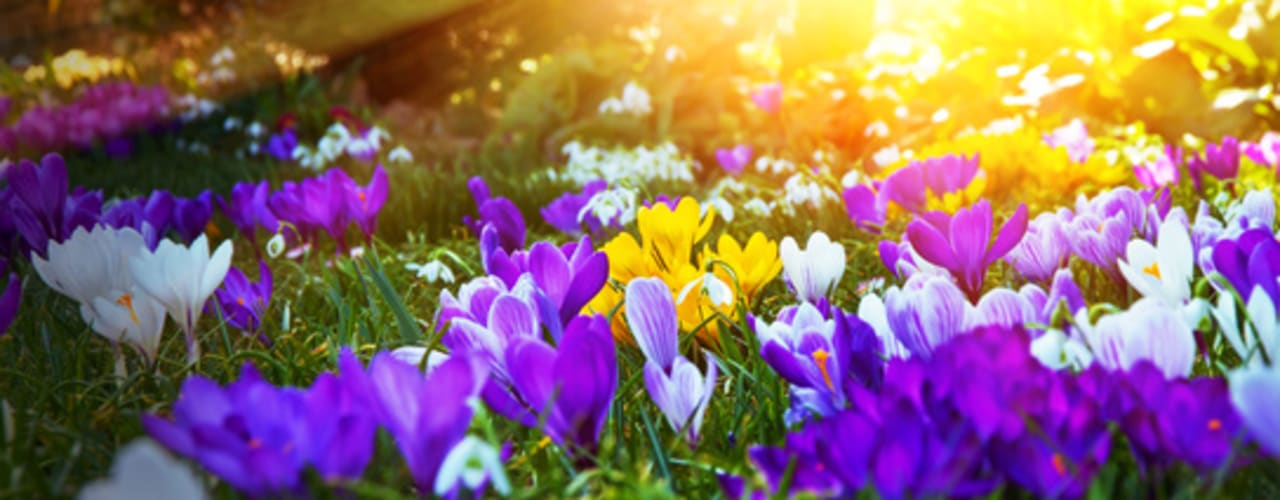 Inspiration GARDOMAT - Die Gartenideenmacher Klassischer Garten