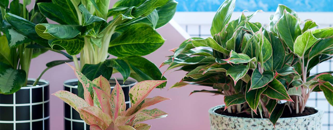 تنفيذ Pflanzenfreude.de,