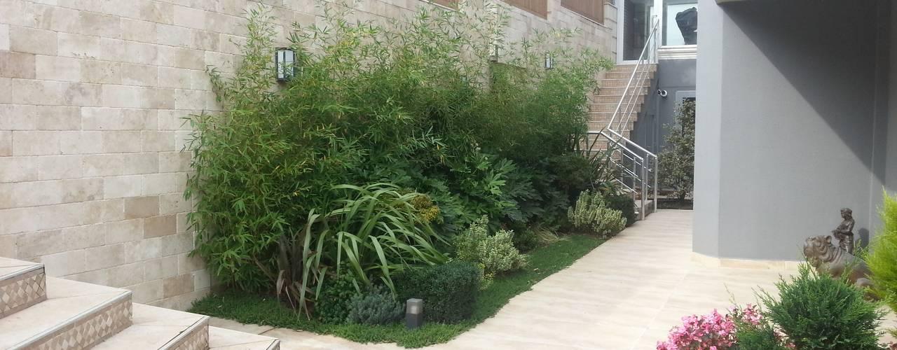 abelia peyzaj – abelia 2016: modern tarz Bahçe