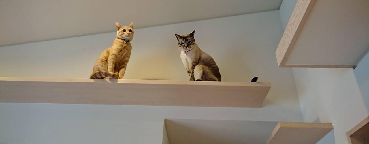 愛犬愛猫家住宅~ジョエルとその仲間たち~ 北欧デザインの リビング の stage Y's 一級建築士事務所 北欧