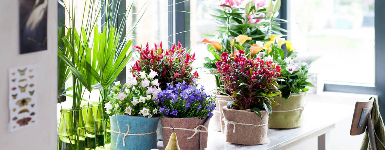 Pflanzenfreude.de Paesaggio d'interni Variopinto