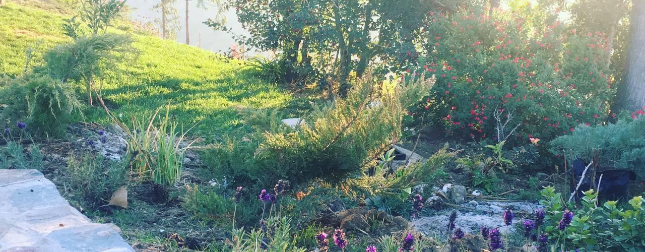 Jardín silvestre y de bajo mantenimiento Jardines de estilo rústico de Agroinnovacion paisajismo sustentable Rústico