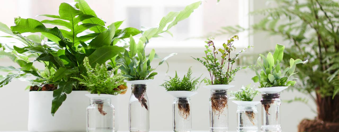 Zimmerpflanze des Monats Februar: modern  von Pflanzenfreude.de,Modern
