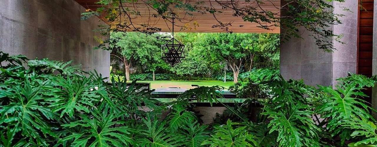 Canelo exteriores Jardin avant Vert