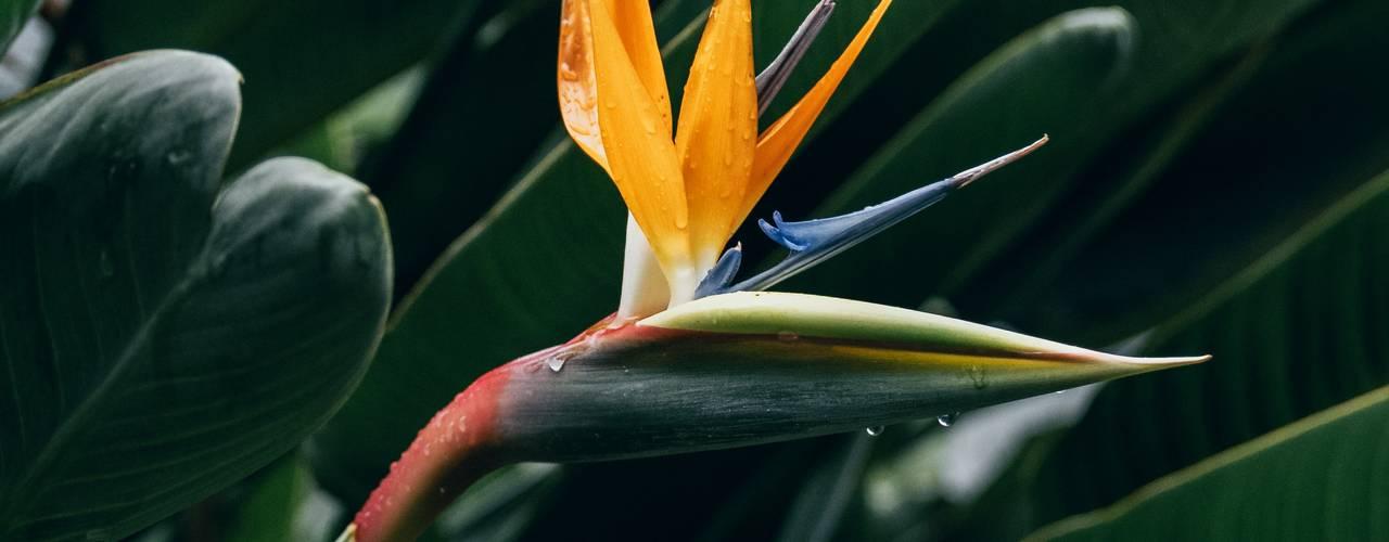 Interioforest Plantscaping Solutions Taman Tropis