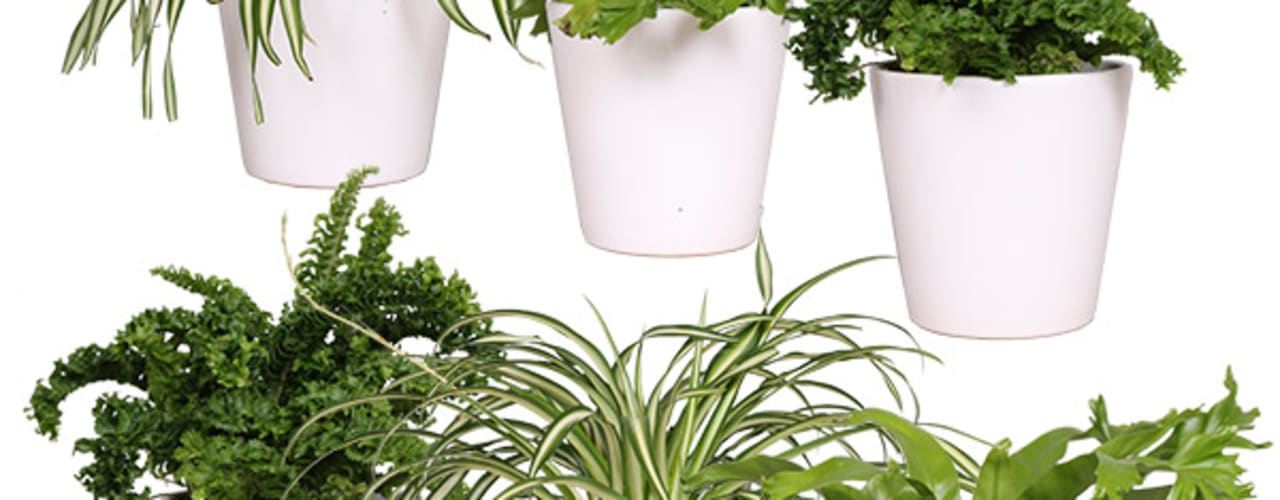 Kamerplanten: modern  door Plantje.nl, Modern