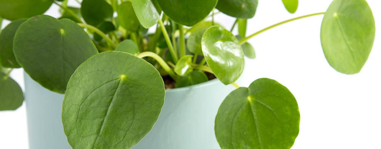 10 Plantas de Interior Para Iniciantes Urban Jungle - Plantas e Projectos CasaPlantas e acessórios