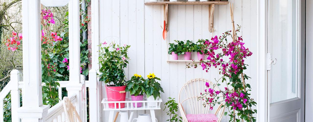 Pflanzenfreude.de BahçeBitki & Çiçekler