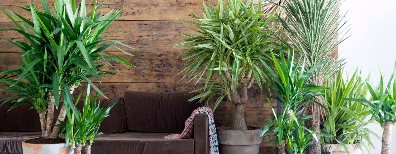 Pflanzenfreude.de Salas/RecibidoresAccesorios y decoración