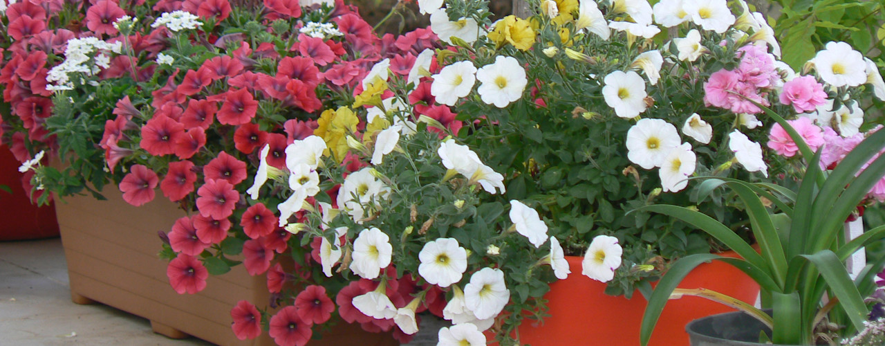 sihirli peyzaj sihirlipeyzaj Akdeniz Bahçe