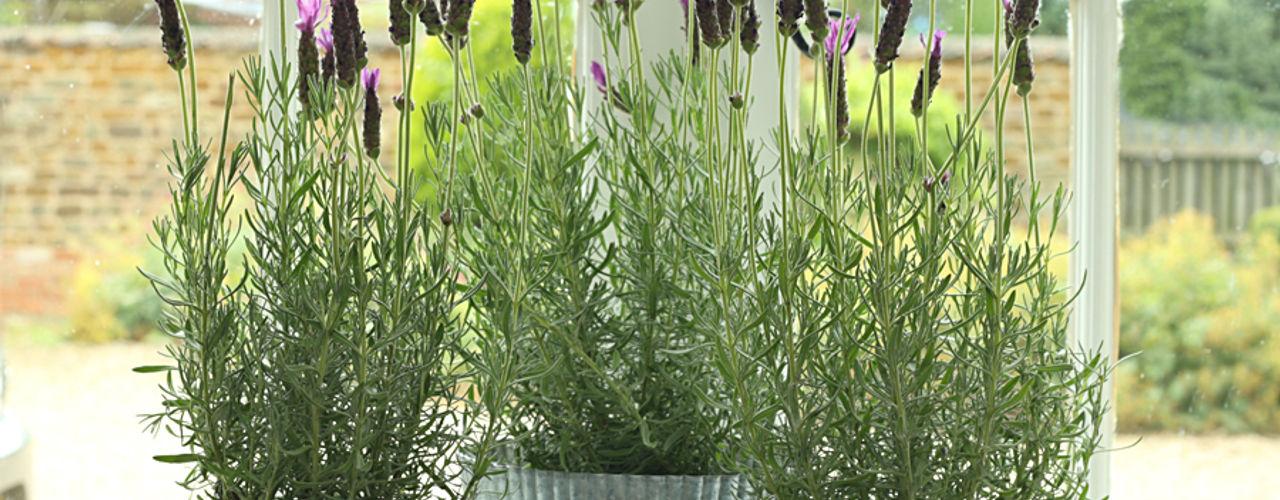 Ella James Garden Accessories Range ELLA JAMES JardimPotes vasos