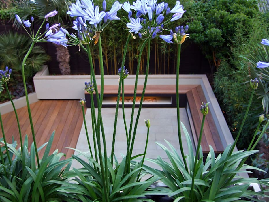 Garden Viewed From Roof Terrace With Agapanthus Flowers Modern