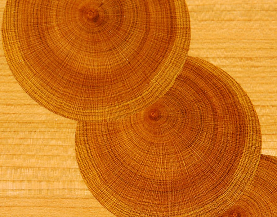 Laburnum oyster detail de Simon Harrison Furniture