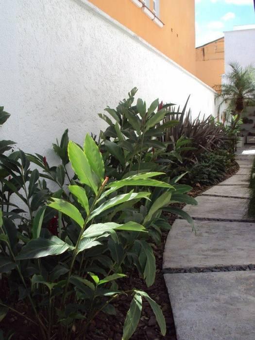 Projeto e execução de paisagismo Jardins tropicais por homify Tropical