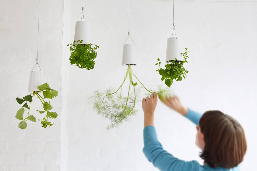 Sky Planter Blumentopf: modern  von Greenbop,Modern