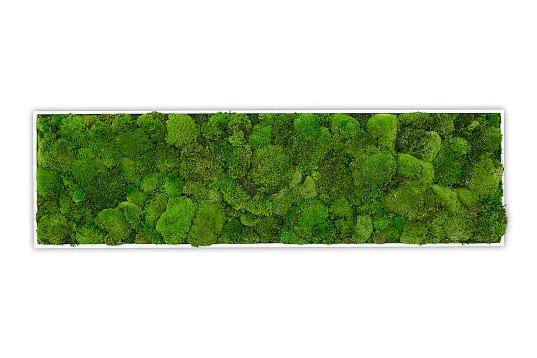 Kugelmoos Bild:  Raumbegrünung von Greenbop