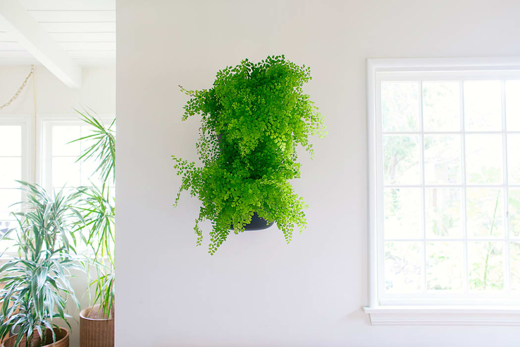 NEW Living Wall Planter de Woolly Pocket