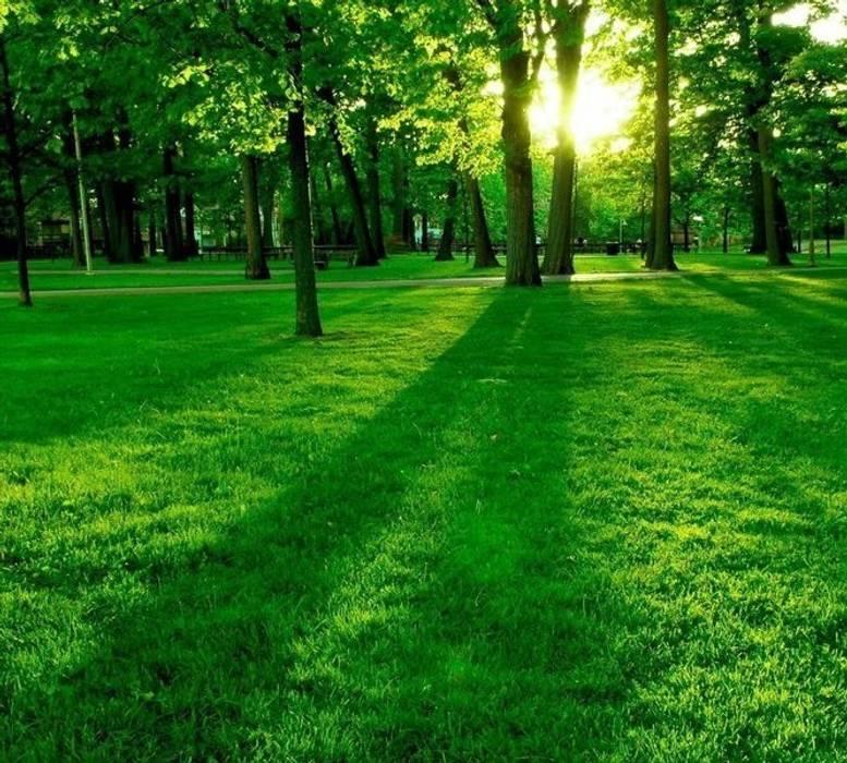 Dotto Francesco consulting Green Eclectic style garden