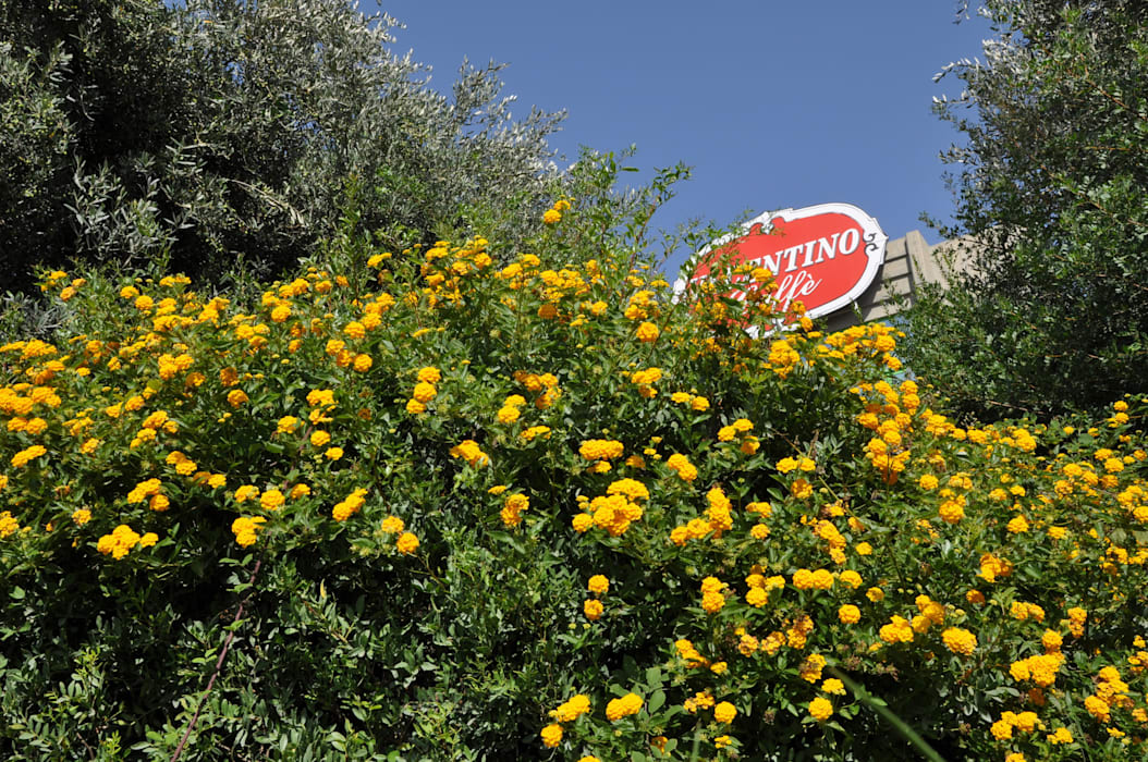 MELLOGIARDINI EXTERIOR DESIGNERS Mediterranean style garden