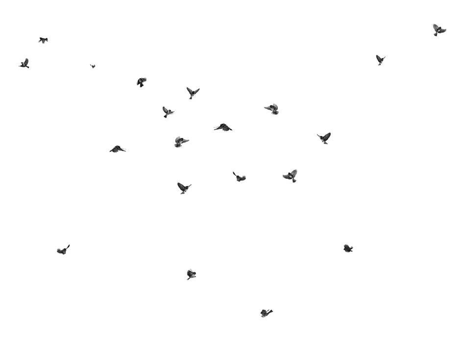 Wallpaper Sparrow:  Winkelruimten door Snijder&CO