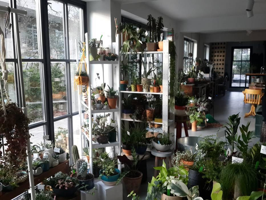 labofem – Big windows & doors :  tarz Dükkânlar, İskandinav